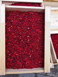 Lingonberry Stock Photos