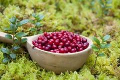 Lingonberry Fotos de archivo libres de regalías