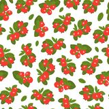 Lingonberry berries seamless pattern on white background. Wild berry with hand-drawn style. Vector illustration stock illustration