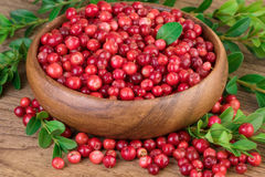 Lingonberry da airela na bacia de madeira Imagem de Stock Royalty Free