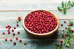 Lingonberry fresco da airela, partridgeberry, foxberry na bacia de madeira na tabela rústica do vintage Imagem de Stock