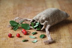 Herbs and berries for health royalty free stock images