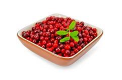 Lingonberry maduro em uma bacia Imagem de Stock Royalty Free