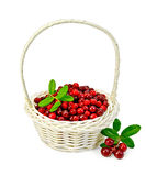 Lingonberry ripe in a white basket Stock Photos