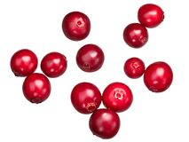 Lingonberry vaccinium vitis, ścieżki, wierzchołek Obraz Stock