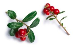 Lingonberry vaccinium vitis-idaea, top view, paths. Lingonberry fruits of Vaccinium vitis-idaea, top view. Clipping paths, shadow separated stock photos