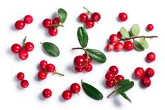Lingonberry vaccinium vitis-idaea, top view, paths. Lingonberry fruits of Vaccinium vitis-idaea, top view. Clipping paths, shadow separated stock image