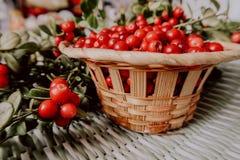 Lingonberry vermelho na flora euro-asiática da airela da floresta, lingonberry da floresta fotografia de stock