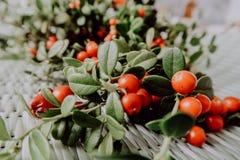 Lingonberry vermelho na flora euro-asiática da airela da floresta, lingonberry da floresta foto de stock