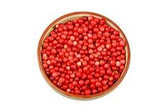 Lingonberry & x28;Vaccinium vitis-idaea& x29; Stock Images