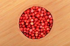 Lingonberry & x28;Vaccinium vitis-idaea& x29; Royalty Free Stock Images
