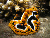 lingot de mer Photographie stock libre de droits
