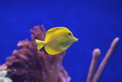 Linguetta gialla 2 Immagini Stock