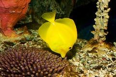 Linguetta gialla immagine stock