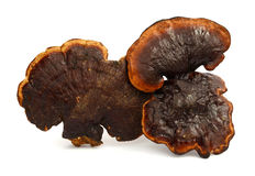 Lingzhi Mushroom Ganoderma Lucidum Isolated Stock Photos