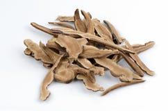 Lingzhi Mushroom, Lingzhi (Ganoderma lucidum (Fr.) Karst) Stock Image