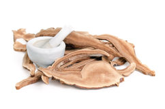 Lingzhi-Pilz, chinesische traditionelle Medizin, Ganoderma Lucidu Lizenzfreie Stockfotografie