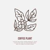 Linha ícone do vetor de árvore de café Logotipo linear da planta do café Esboce o símbolo para o café, barre-o, compre-o Projeto  Imagem de Stock