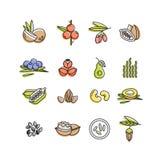 Linha ícones de Superfoods do vetor Bagas, porcas, frutos dos vegetais e sementes Superfoods orgânicos para a saúde e a dieta Imagens de Stock Royalty Free