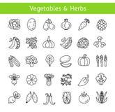 Linha ícones do vetor com vegetais e ervas Estilo de vida saudável ilustração royalty free