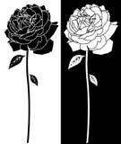 Linha arte da flor de Rosa Foto de Stock