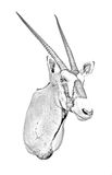 Linha arte de um Oryx Fotos de Stock