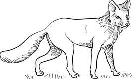 Linha arte do Fox ilustração stock