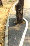 A linha branco é a menos que árvore Imagem de Stock Royalty Free