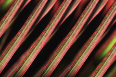 Linha colorida abstrata na natureza Foto de Stock Royalty Free