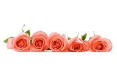 Linha cor-de-rosa das rosas imagens de stock