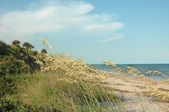Linha costeira Imagens de Stock