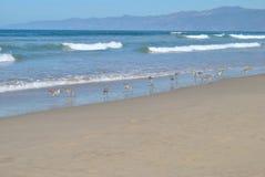Linha costeira com pássaros foto de stock
