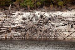 Linha costeira de lago Burbury Tasmânia Imagens de Stock