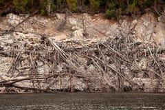 Linha costeira de lago Burbury Tasmânia Imagem de Stock