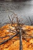 Linha costeira de lago Burbury Tasmânia Fotos de Stock Royalty Free