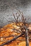 Linha costeira de lago Burbury Tasmânia Imagens de Stock Royalty Free