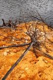 Linha costeira de lago Burbury Tasmânia Fotografia de Stock