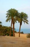 Linha costeira do Mar Morto Imagens de Stock