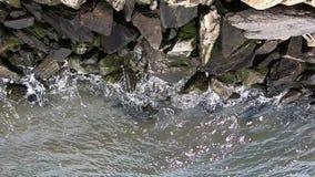 A linha costeira em Roosevelt Island, New York City -2 video estoque