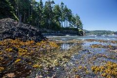 Linha costeira olímpica 3 da península Fotos de Stock Royalty Free