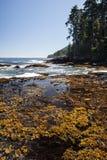 Linha costeira olímpica da península Imagem de Stock Royalty Free