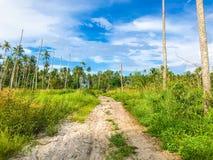 Linha da costa da floresta do coco com a estrada da areia à praia do mar imagens de stock