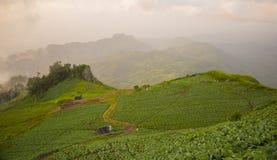 Linha da estrada de montanha verde com névoa imagens de stock