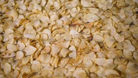 A linha da fábrica da produção move microplaquetas de batata douradas após a fritura, movimento lento filme