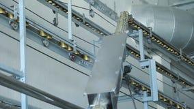 Linha da fabricação das conservas alimentares Linha do transporte do alimento de lata Bens enlatados filme