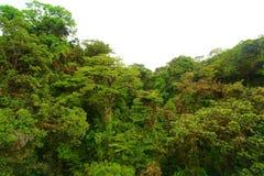 Linha da floresta Foto de Stock Royalty Free