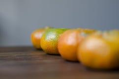 Linha das tangerinas Foto de Stock