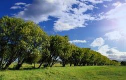 Linha de árvore Fotos de Stock