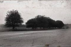 Linha de árvore Fotografia de Stock