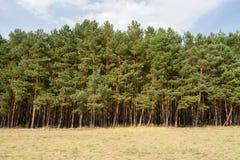 Linha de árvore Fotos de Stock Royalty Free